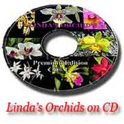 Buy my orchids on CD!