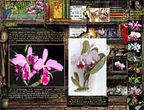 Visit my Orchid Nights site designed for advanced orchid and computer aficionados!