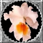 Welcome to Linda's Orchid Page